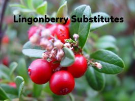 Top 5 Lingonberry Substitutes
