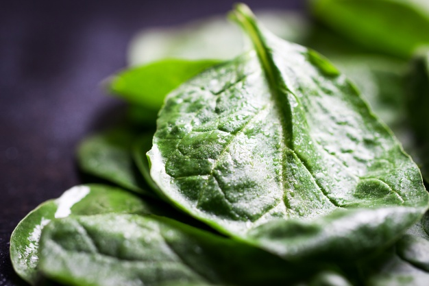 green leaf close up dark table 1220 588 - Spinach supplement good for muscle strength