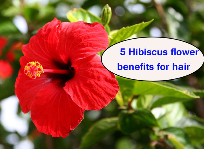 5 Hibiscus flower benefits for hair