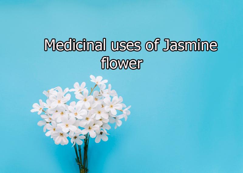 Medicinal uses of Jasmine flower 11 - Medicinal uses of Jasmine flower