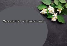 Medicinal uses of Jasmine flower