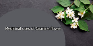 Medicinal uses of Jasmine flower