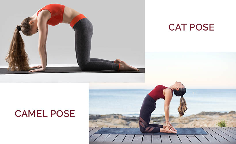 cat camel pose - 5 Stretches for Immediate Relief of Back Pain