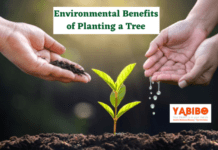 10 Environmental Benefits of Planting a Tree