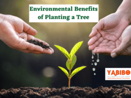 10 Environmental Benefits of Planting a Tree