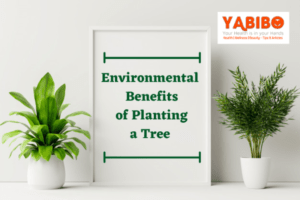 Best Lead Generation Tips for Those in Real Estate 13 1 300x200 - 10 Environmental Benefits of Planting a Tree