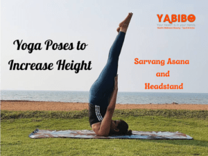 Ilayathalapathy 18 300x225 - 6 Simple Yoga Poses to Increase Height