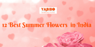 12 Best Summer Flowers in India