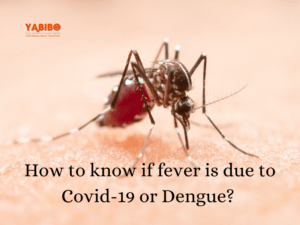 Coconut oil 50 300x225 - How to know if fever is due to Covid-19 or Dengue?