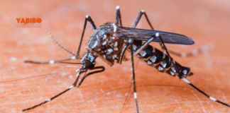 How to know if fever is due to Covid-19 or Dengue?