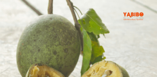 Top benefits of wood apple during pregnancy