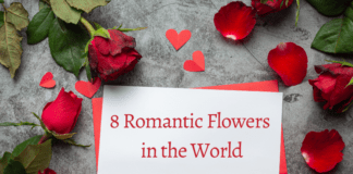 8 Romantic Flowers in the World
